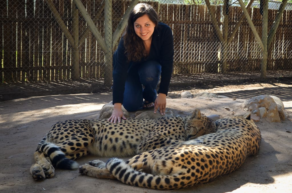 Playing with a Leopard in Oudtshoorn