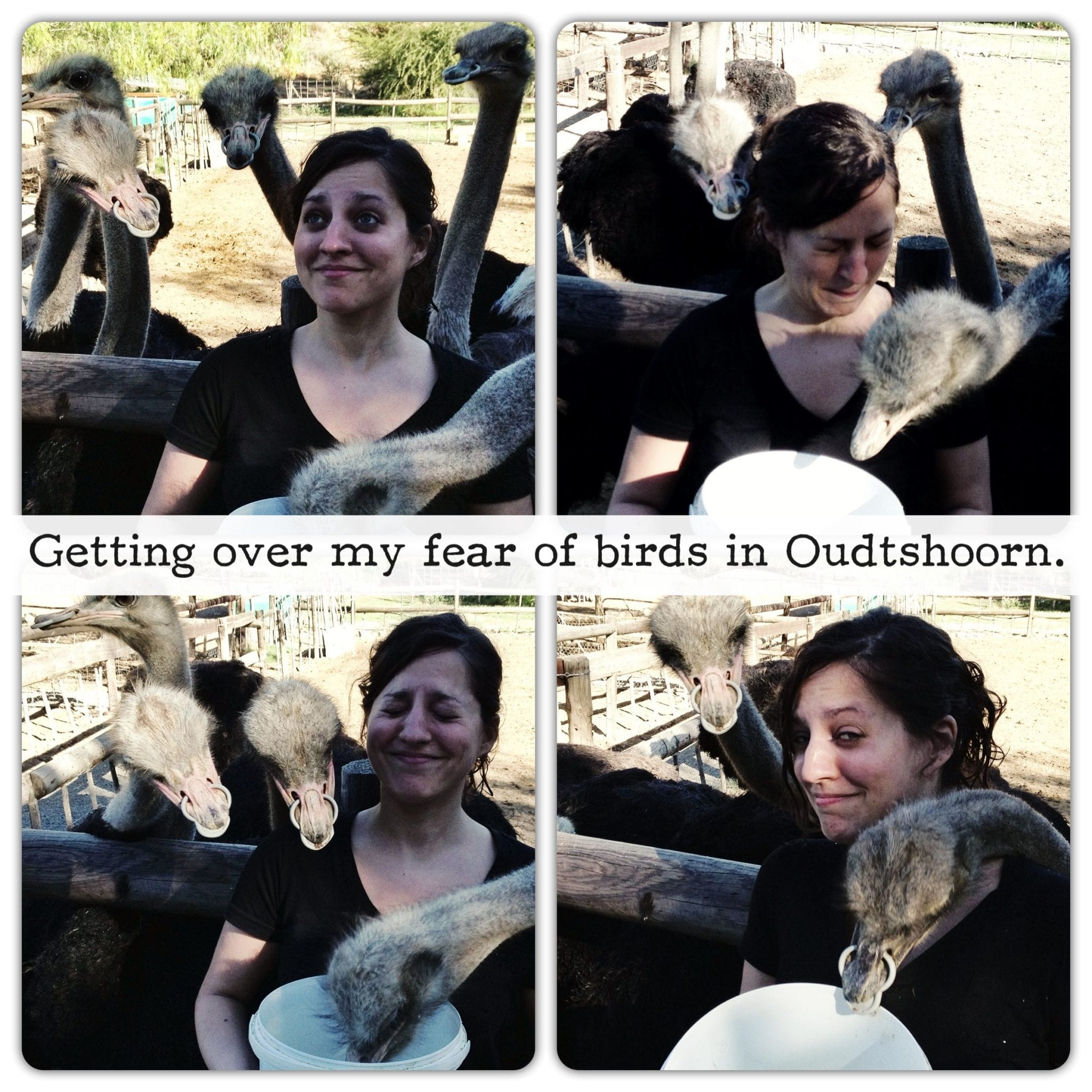 Kate and the Ostriches