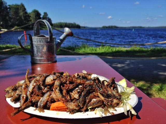 Fish Lunch in Kuhmo