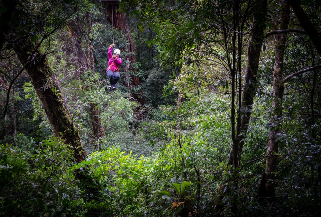 Kate zip lining through the rainforest.