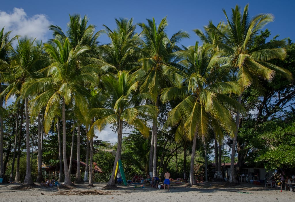 Palm Trees on a gray beach in Samara, Costa Rica