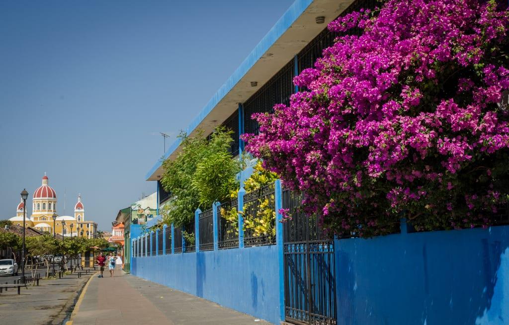 Granada Flowers