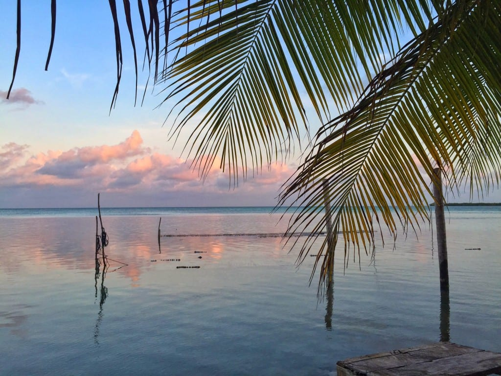 Pink and blue sunrise with palm fronds in Belize