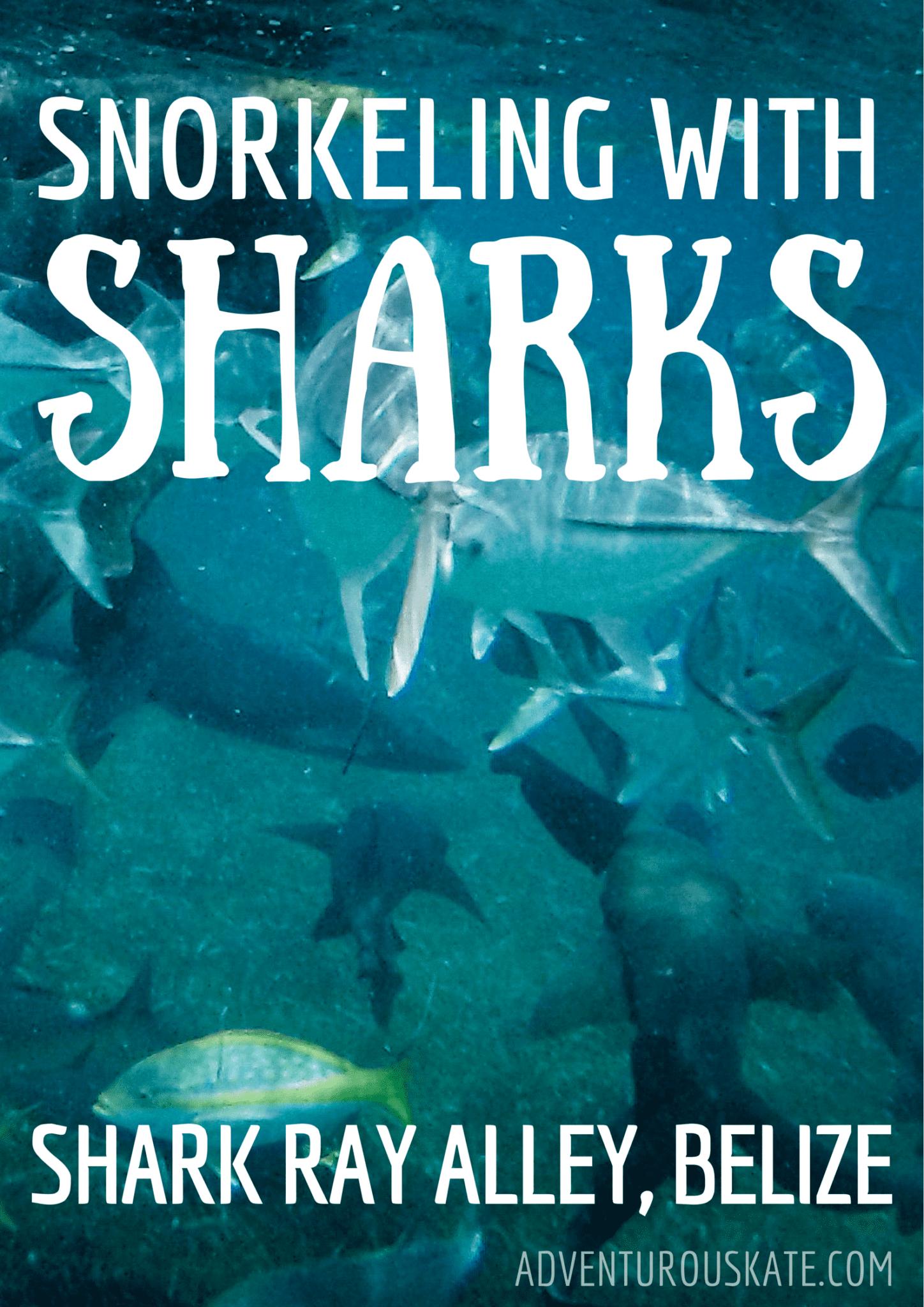 Snorkeling with Sharks in Belize! via Adventurous Kate