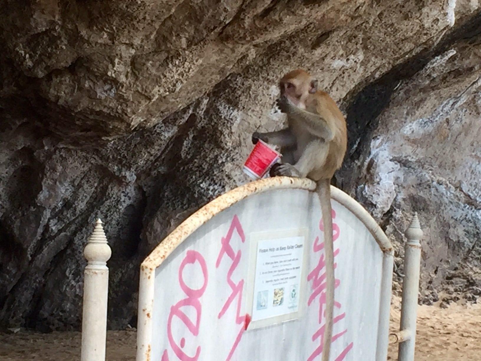 Monkey in Railay
