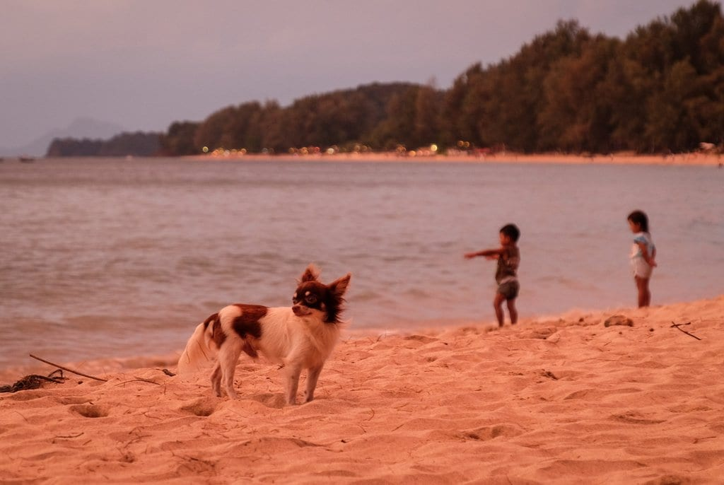 Koh Lanta Sunset Puppy