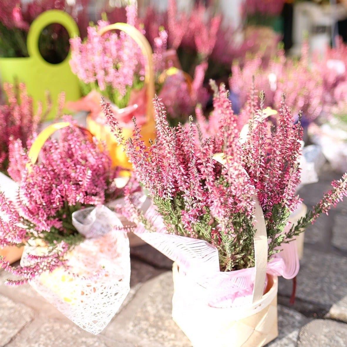Krakow Flowers