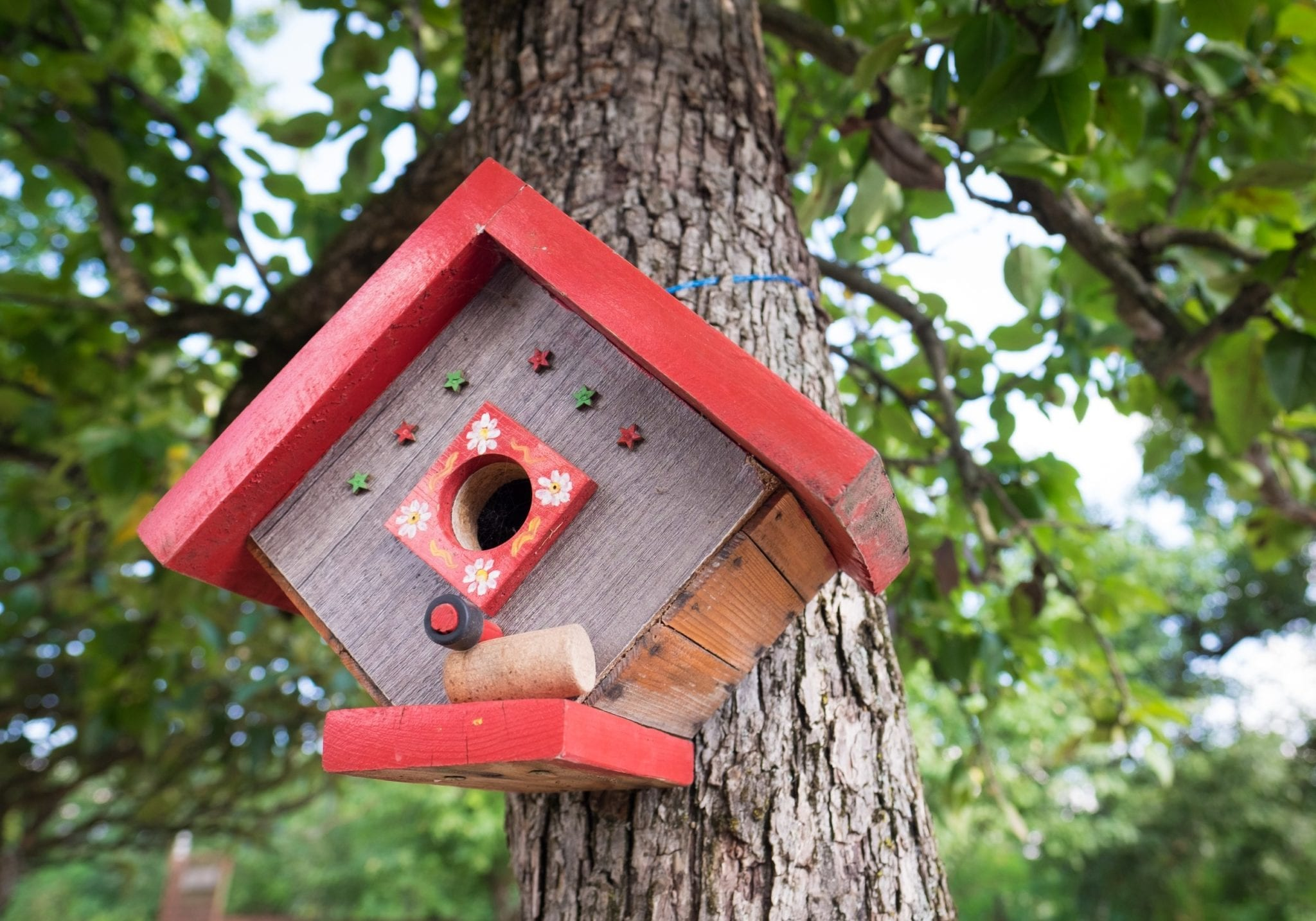 A small wooden birdhouse with bright red trim hammered to a tree in Georgia.