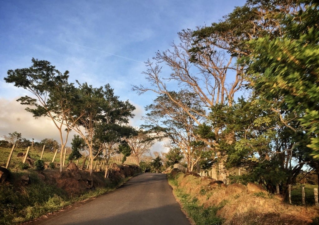 A Costa Rican road surrounded by lush vegetation at golden hour.