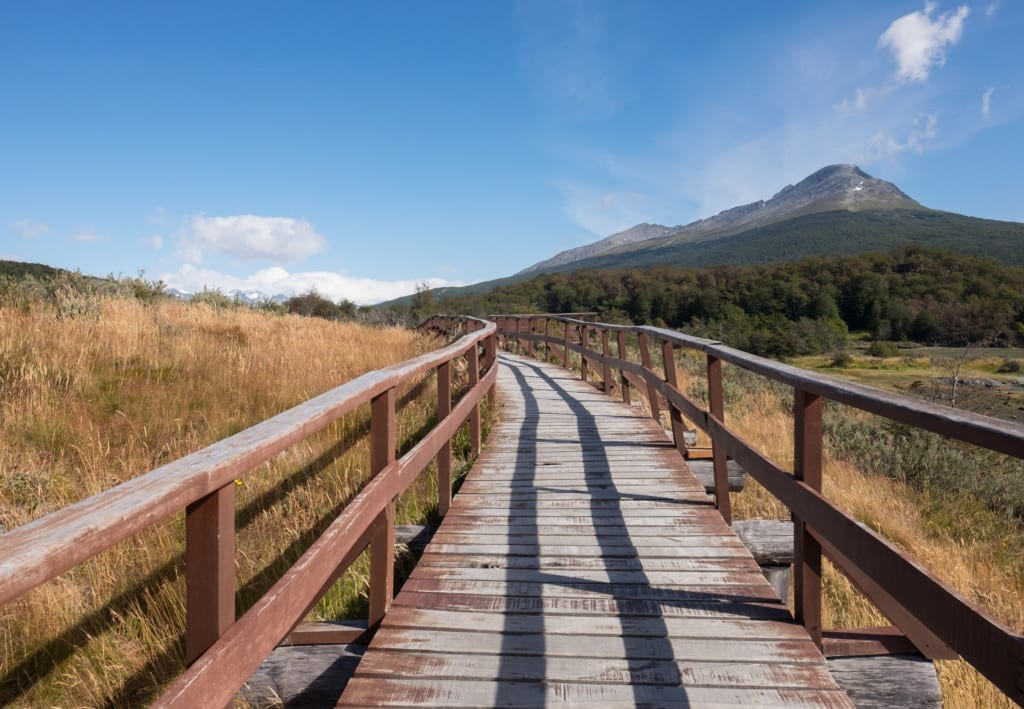 A weathered brown plank walkway over the yellow grasses of Patagonia.