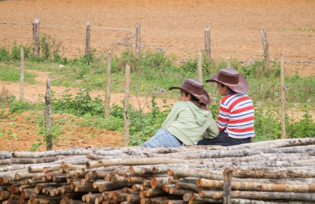 Two young boys in striped shirts and cowboy hats leaning on a pile of wood in front of a green field.