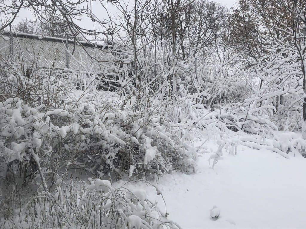A snowy backyard in Massachusetts.