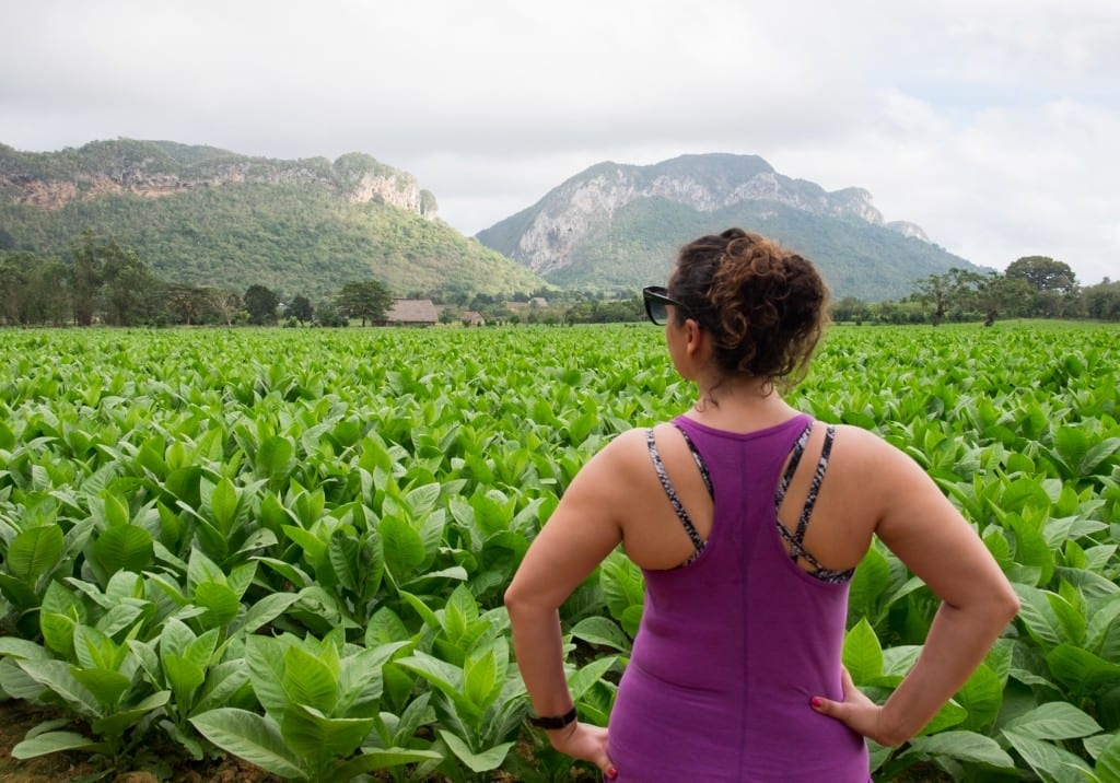 Kate standing in front of green tobacco fields, facing away, in a purple workout top.