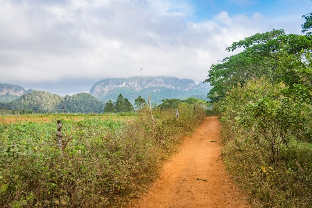 An orange dirt road surrounded by lush greenery, mountains in the background.