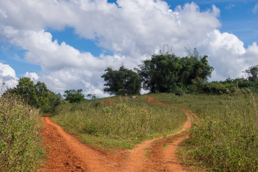 Two orange dirt paths in the Vinales countryside.
