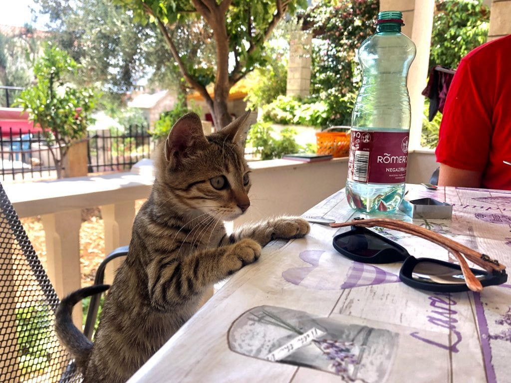 A small gray-brown tabby kitten standing on a chair at an outdoor dining table and putting her paws on the table, like she's ready to order.