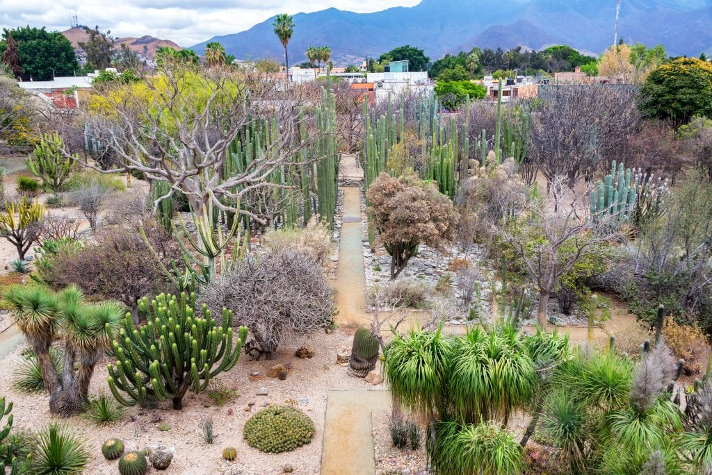 A large garden filled with cacti, palms, and shrubs in shades of brown and green.